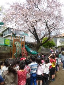 園庭の八重桜は今が見頃です。