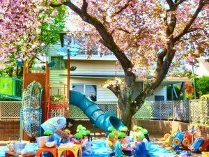 お花見給食の様子。 桜の下でみんなニコニコ。会話もはずんでいたようです。